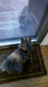 piglet-staring-at-cat-outside-window